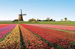 Olanda. Kesler (KSA) conferma una nuova legge sui giochi a partire dal 1 gennaio 2019