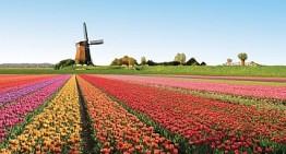 Olanda. Multa a sei cifre per un operatore online senza licenza, il KSA è passato alla linea dura