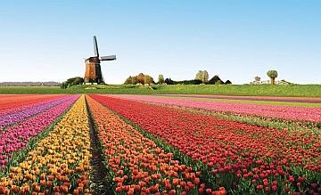 Olanda. Il governo spinge verso una nuova regolamentazione dell'iGaming