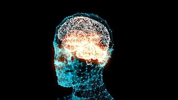 Una ricerca italiana identifica l'area del cervello che controlla la passione per il gioco