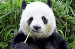 Riduzione slot machine. Settore vittima dell'allegoria 'del Panda'